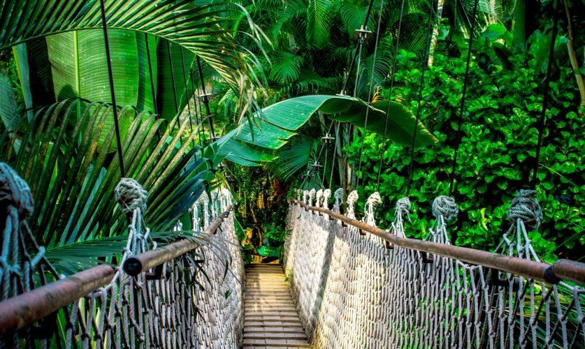 Parc national de Manù
